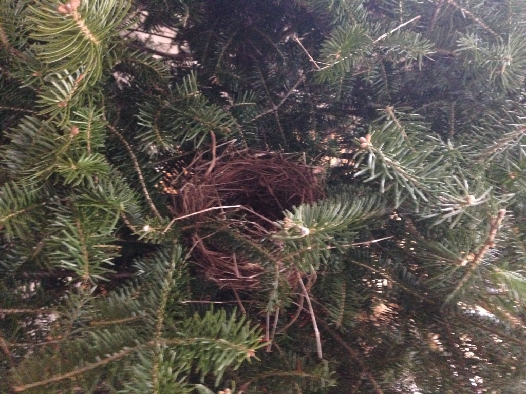 Bird nest dec 002